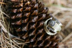 Zwei goldene Ringe Stockfotografie