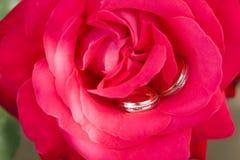 Zwei Goldringe mit Rosa stiegen Stockbilder