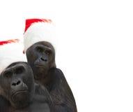 Zwei Gorillas Stockbild