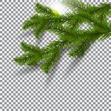 Zwei grün, realistische Schatten mit Fichtenzweigen Weihnachtsfichtenzweige Auf einem Plaidhintergrund Die Sonne Weihnachten Stockfotografie