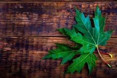Zwei grüne Ahornblätter auf Holztisch Stockfotografie