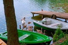 Zwei grüne Boote auf dem Ufer, die Schwäne schwammen bis zum Boot Stockfoto