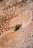zwei grüne Papageien an einer Wand Stockfotografie