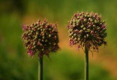 Zwei Grünpflanzen stockfoto