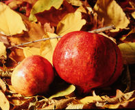 Zwei Granatäpfel Stockfotografie