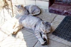Zwei graue gestreifte Katzen in der Sonne Ansichten des Dorfs lizenzfreies stockbild