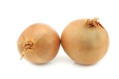 Zwei große braune Zwiebeln Stockfoto