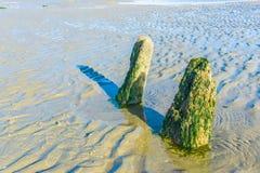 Zwei große Felsen, die in der Meerespflanze auf dem Strandozean bedeckt werden, gestalten landschaftlich Stockfotografie