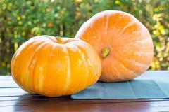Zwei große Kürbise auf einem Holztisch draußen mit grünem Hintergrund, Biohoflebensmittel, Halloween und Herbst ernten Konzept stockbild
