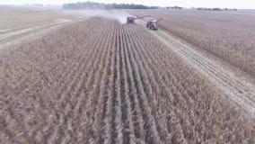 Zwei große moderne LKW-Mähdrescherlandwirtschaftsfahrzeuge, die organischen Weizen ernten, erntet vom Landwirtschaftsfeld in der  stock video