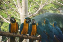 Zwei Gruppen von netten Papageien auf dem Holz lizenzfreies stockfoto