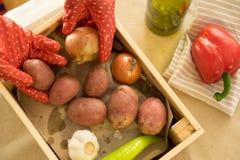 Zwei Hände in den Gartenhandschuhen, die Zwiebel und Kartoffel hodling sind stockfotos