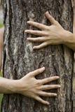 Umarmen des Baums Stockbilder