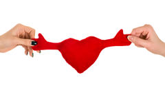 Zwei Hände, die ein rotes Herz halten Lizenzfreie Stockfotos