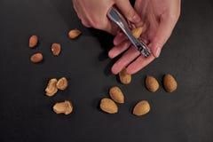 Zwei Hände mit Nussknacker und Mandeln stockbilder
