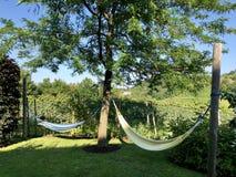 Zwei Hängematten, die zwischen Bäumen nahe Weinberg, Sommer in Italien binden lizenzfreies stockfoto