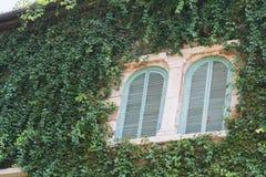 Zwei hölzerne Fenster mit Bäumen Stockfotos