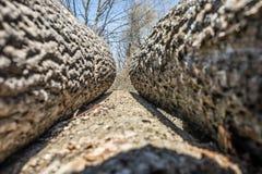 Zwei Handschnitt eines harten Zweigs Lizenzfreie Stockfotografie