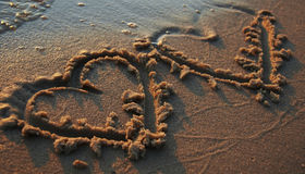 Zwei heards auf Sand Stockfotografie