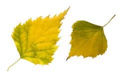 Zwei Herbstblätter Stockbilder