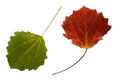 Zwei Herbstblätter Stockbild