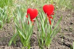 Zwei Herzen im Laub. Stockbild