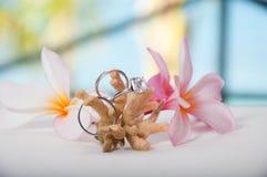 Zwei Hochzeitsringe auf Koralle Stockfoto