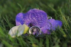 Zwei Hochzeitsringe auf violetter Blume Stockbilder