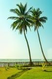 Zwei hohe Palmen auf exotischen asiatischen Inseln Stockbild