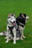 Zwei Hunde auf dem Gras Lizenzfreies Stockfoto
