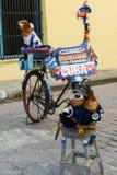 Zwei Hunde auf der Straße von altem Havana Stockfoto