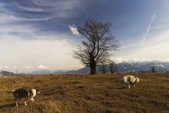 Zwei Hunde auf einen Hügel Stockbilder