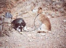 zwei Hunde, die auf ihre Eigentümer gebunden an einem alten Stamm warten lizenzfreie stockbilder