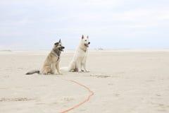 Zwei Hunde, die auf Strand sitzen Stockbild
