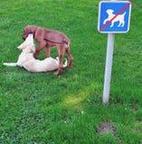 Zwei Hunde, die auf verbotenem Platz spielen Stockbild