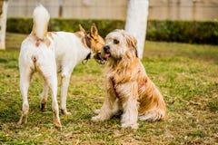 Zwei Hunde, die draußen spielen Hund wird erschrocken lizenzfreie stockbilder