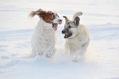 Zwei Hunde, die gegen weißen Schnee spielen Stockbilder
