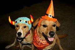 Zwei Hunde, die Halloween-Kostüme tragen stockbild