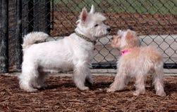 Zwei Hunde, die sich zum ersten Mal treffen Stockfoto