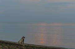 zwei Hunde, die Sonnenaufgang schauen Stockbilder