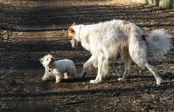 Zwei Hunde in einem parc Stockbild