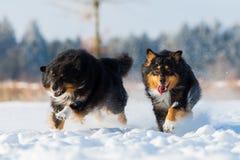 Zwei Hunde im Schnee Lizenzfreies Stockfoto