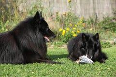 Zwei Hunde interessiert an frischen Fischen Stockbild