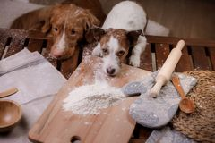 Zwei Hunde kochen in der Küche Haustier zu Hause lizenzfreie stockfotografie