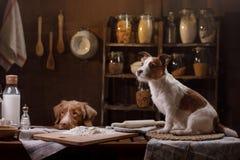 Zwei Hunde kochen in der Küche Haustier zu Hause stockfotografie