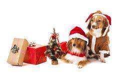 Zwei Hunde mit Weihnachtsgeschenk Stockbilder