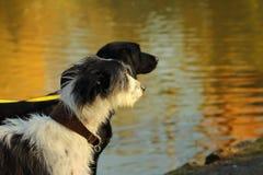 Zwei Hunde am See stockbilder