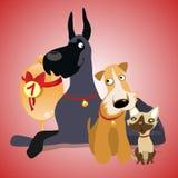 Zwei Hunde und Katze sind Siegermannschaft lizenzfreie abbildung