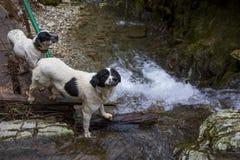 Zwei Hunde Wasserfall und Gebirgsfluss Russland Sochi lizenzfreie stockbilder