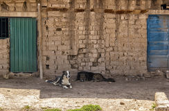 Zwei Hunde, zwei Türen Stockfoto